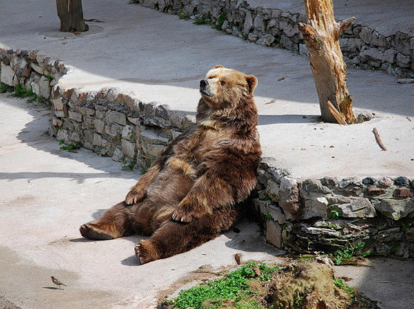 Monsieur l'ours se repose